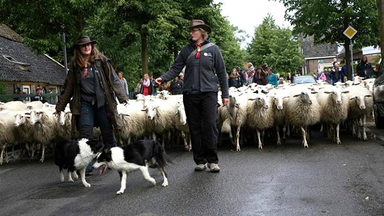 18 juni 2016 - Schaapscheerdersfeest Rheden
